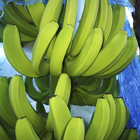 donvic-500-gel-banano